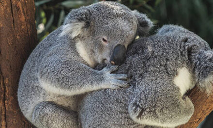 Native Wildlife Carers Grant Now Open